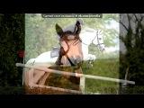 «Со стены Лошадь - это особое чувство ©» под музыку May Little Pony - Песня Радуги Дэш  Youre Gonna Go Far Kid. Picrolla